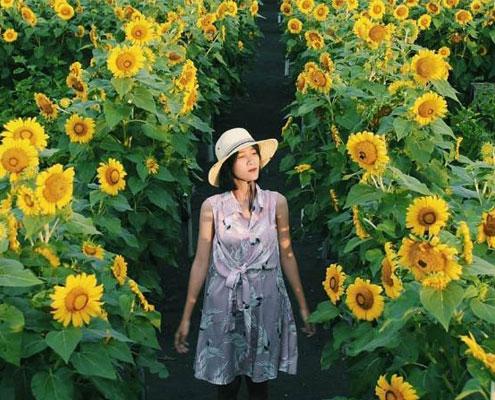 Kebun Bunga Matahari Yogyakarta